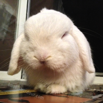 Our first bun, Fiver, whom we adopted in November 2012.